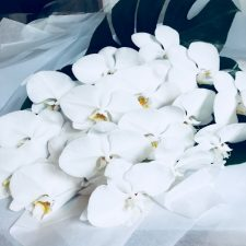 White Phalaenopsis Bouquet